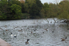 7-POOLS-OF-SUTTON-PARK-28-10-20-038-2