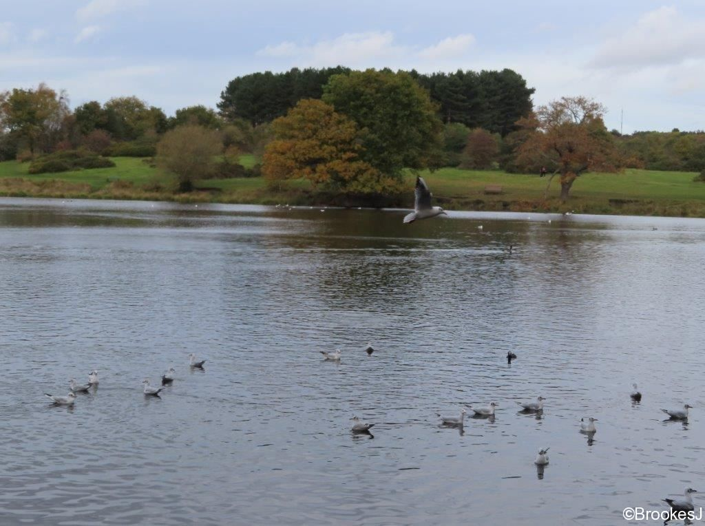 7-POOLS-OF-SUTTON-PARK-28-10-20-024-2