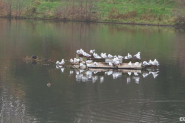WITTON-LAKES-and-BROOKVAIL-PARK-29-11-20-004