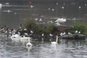 WITTON-LAKES-and-BROOKVAIL-PARK-29-11-20-010