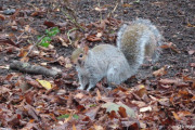 WITTON-LAKES-and-BROOKVAIL-PARK-29-11-20-020
