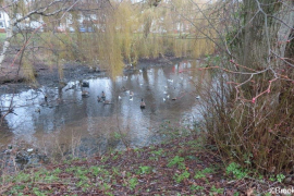 WITTON-LAKES-AND-BROOKVALE-PARK-10-1-21-010