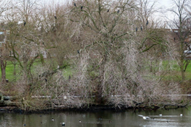 WITTON-LAKES-AND-BROOKVALE-PARK-10-1-21-036
